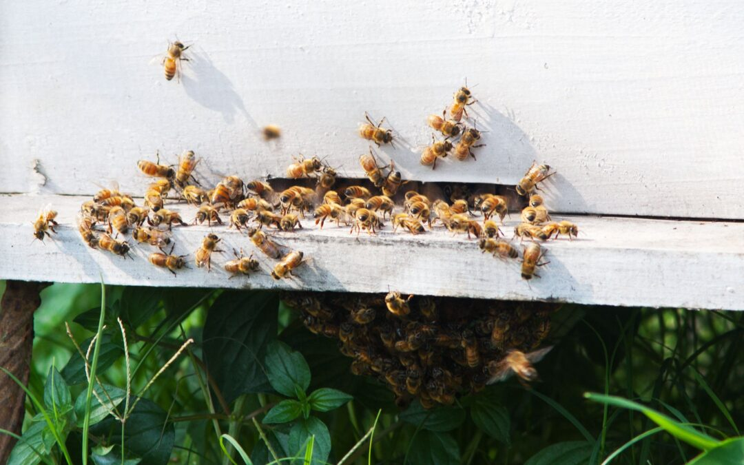 Bees Paint Animal Poo on Their Homes to Repel Giant Hornets